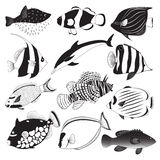 Marine Fish Collection Royalty Free Stock Photo