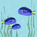 Marine fish color flat design. Sea and fish, ocean fish animal, Stock Image
