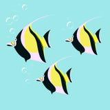 Marine fish color flat design. Sea and fish, ocean fish animal, Royalty Free Stock Photos