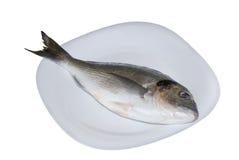 Marine fish dorado Royalty Free Stock Images