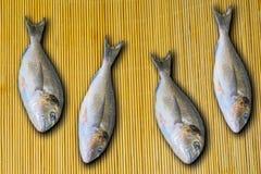 Marine fish dorado Royalty Free Stock Photo