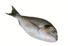 Marine fish dorado Stock Photo