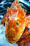 Marine fish exposed for sale on ice - 2 Royalty Free Stock Photography