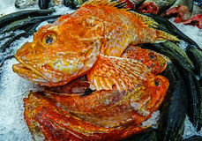 Marine fish exposed for sale on ice Stock Image