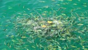 Marine fish stock video