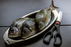 Marine fish fresh in oval plates of stainless steel on a dark ba Stock Images