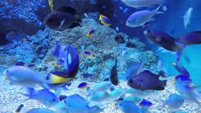 Marine Fish. Many type of marine coral reef fish stock video