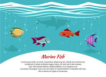 Marine fish poster. Underwater world background with place for text. Vector illustration Royalty Free Stock Photo