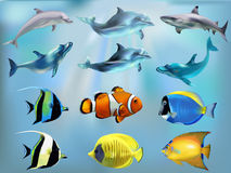 Marine fish in the set. Set of marine fish with dolphins and sharks vector illustration