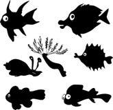 Marine fish Royalty Free Stock Photography