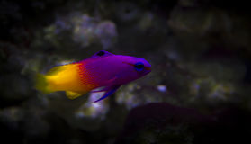 Marine fish tank aquarium Royalty Free Stock Photos