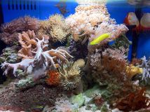 Marine fish tank with soft corals Royalty Free Stock Photos