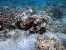 Undersea world Royalty Free Stock Image