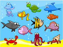 Marine fishes, vector stock illustration