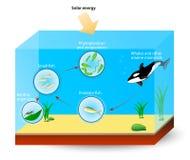 Marine Food Chain eller matrengöringsduk Arkivbild