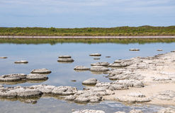Marine Fossils in Lake Thetis Stock Photos