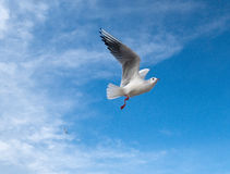 The Marine gull Stock Photos