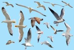 Marine gulls Stock Photo
