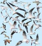 Marine gulls Royalty Free Stock Photos