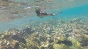 Marine iguana in the Galapagos islands, Ecuador stock video