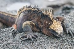 Galapagos Island Landscapes and Wildlife stock images