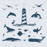 Marine illustration with sea creatures Royalty Free Stock Image