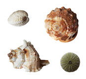 Marine invertebrates Stock Photo
