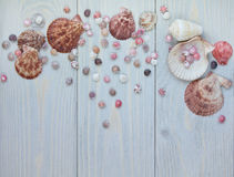 Marine items on blue wooden background. Top view of scallop shells and overs. Royalty Free Stock Photo