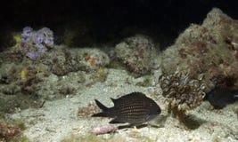 Marine landscape Stock Photography