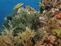 Marine landscape in Cabo de Palos (Murcia) Stock Photography
