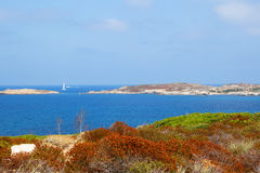 Marine landscape. Orange, brown, green grass, the lower part of the pictures, horizon, sea, blue sky, boat Stock Image