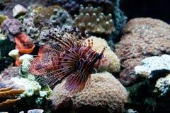 Marine life Stock Image