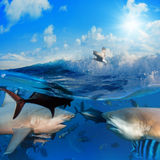 Marine life. Partially submerged view of a variety of sea and marine life royalty free illustration