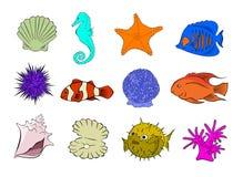 Marine Life 2 Stock Image