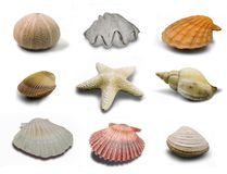 Marine Life. A collection of Marine Life on a white background Royalty Free Stock Images