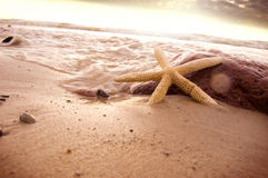 Marine life. Royalty Free Stock Image