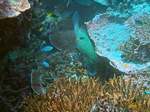 Marine life. Underwater seabed with colorful marine life and fish Stock Photography