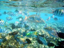 Marine life. Fish  Red Sea Coral Wild Marine life Stock Photos