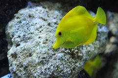 Free Marine Life Stock Photography - 4953212