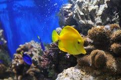 Marine life Royalty Free Stock Image