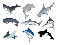 Marine Life 5. An assortment of underwater creatures Stock Photography