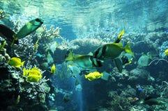 Marine life. Coral reef Royalty Free Stock Image
