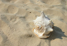 Marine life. Shell on the sand stock photography