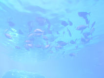 Marine life abstract background Stock Image