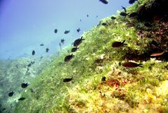 Marine life. In adriatic sea Stock Photography