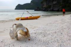 Marine life animal bones with kayaking on the beach. Stock Photos