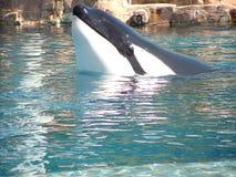 Marine Life Animals Royalty Free Stock Photos