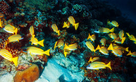 Marine life background Royalty Free Stock Photos