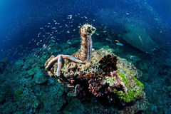 Marine life. Beautiful Marine life underwater world Stock Photography