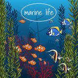 Marine life in bright colors Stock Photography